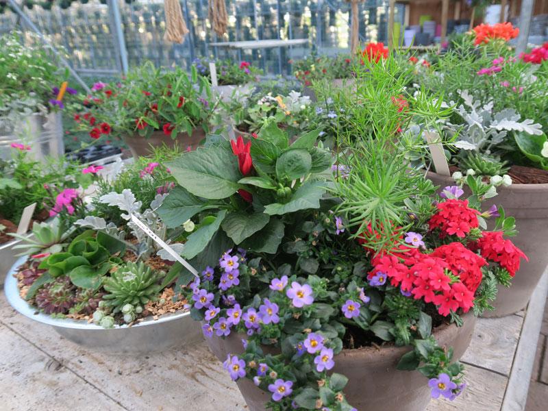 Plantenkwekerij_Eric_Sleutjes_Voorjaar_1