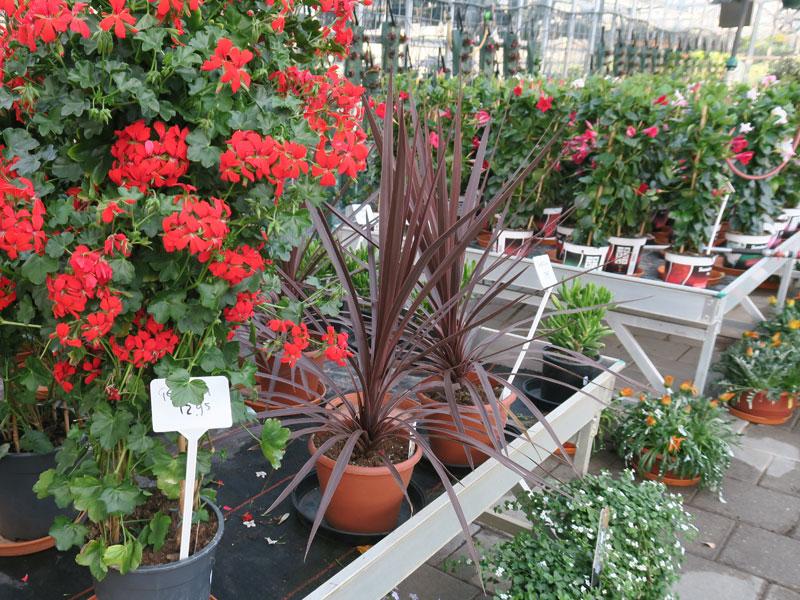 Plantenkwekerij_Eric_Sleutjes_Voorjaar_12
