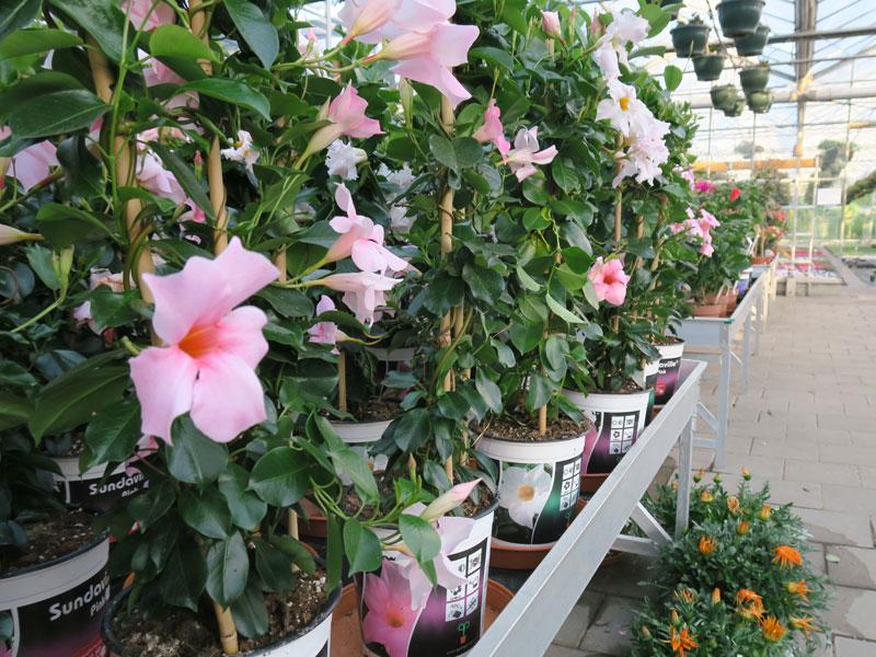 Plantenkwekerij_Eric_Sleutjes_Voorjaar_13