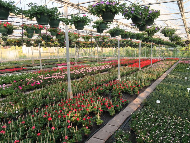 Plantenkwekerij_Eric_Sleutjes_Voorjaar_16