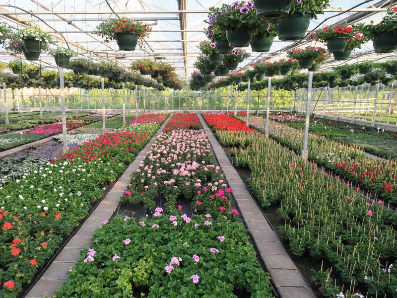 Plantenkwekerij_Eric_Sleutjes_Voorjaar_17